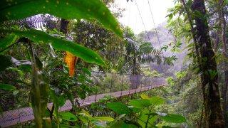 Costa Rica - Volcan Arenal - ponts suspendus