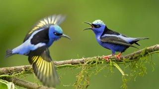 Voyage nature et culture au Nicaragua - Terra Nicaragua