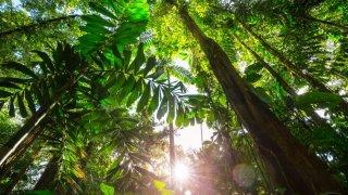 Costa Rica - nature